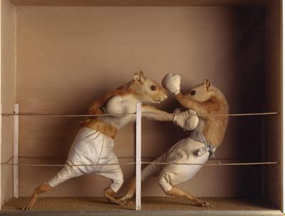 prize-fight