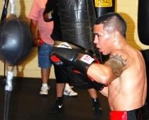 boxer 78